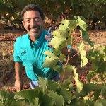 John Catalano of Bent Oak Winery Winemaker Profile