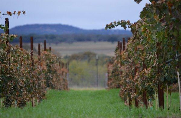 Kuhlman Cellars estate vineyard