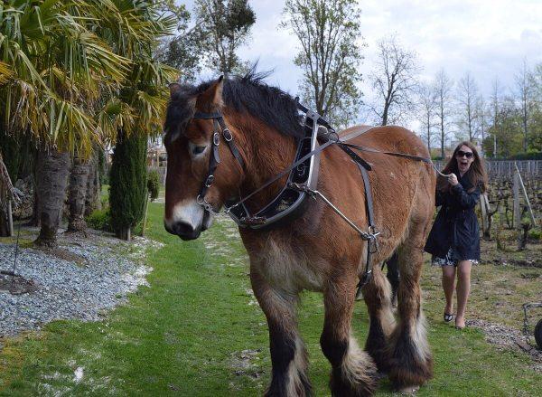 Regina practicing with horse