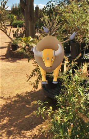 Pokemon at Wildseed Farms
