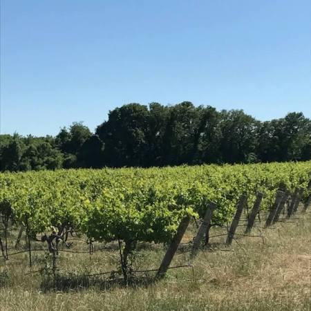 Umbra Winery at La Buena Vida Vineyards vineyards