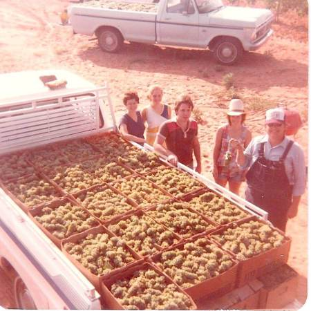 Bringing the grape harvest to the winery