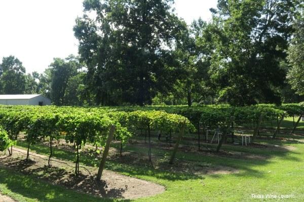 Wild Stallion vineyard