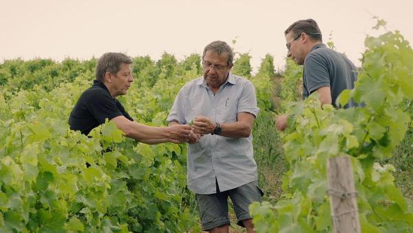Henri Bourgeois - Arnaud, Lionel and Jean-Christophe in the vineyard