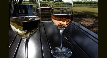Lewis Wines Fish Fry - featured