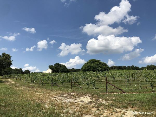 Valley Mills Vineyards vineyard