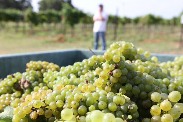 Brennan Vineyards Viognier, Comanche County