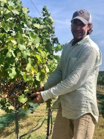Dave Reilly, Duchman Family Winery, Hog Heaven Vineyard