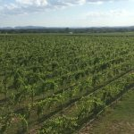 William Chris Wine Company Announces Acquisition of Hoover Valley Vineyard