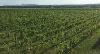 Hoover Valley Vineyards