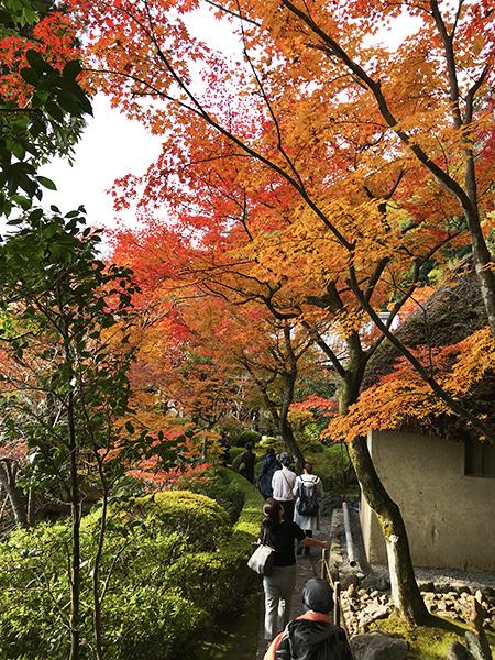 庭園内の紅葉は今が見頃。絵に描いたような美しい赤に感激です。
