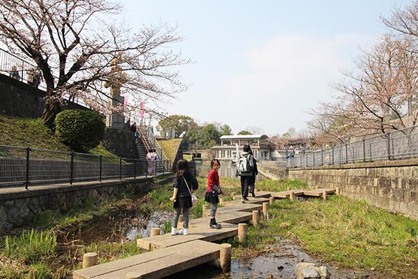 琵琶湖疎水の船溜まり。水際ということもあり先週はほとんど桜は咲いていませんでした。