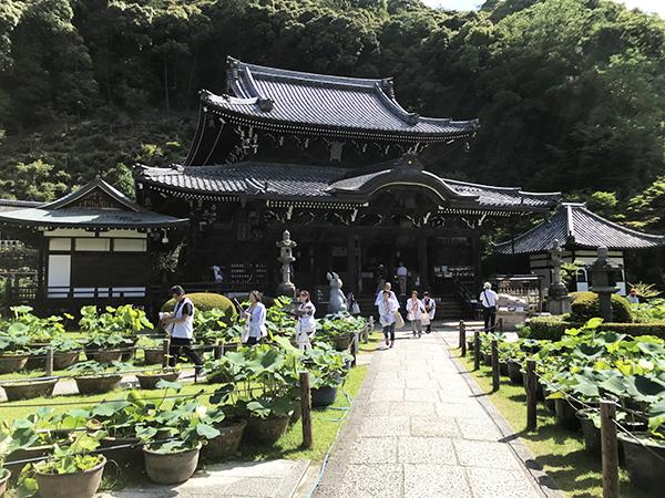 本堂の前には250鉢もの蓮が設置されています。間近でほころぶ蓮の花を見ることができます。