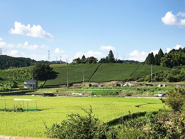 宇治田原町はお茶の名産地。玉露を中心とした銘茶を生産するのどかな山村です。