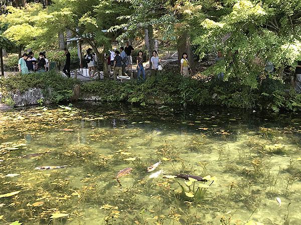 目的地の「モネの池」。モネの池というのは通称で、この池じたいに名前は無いそうです。