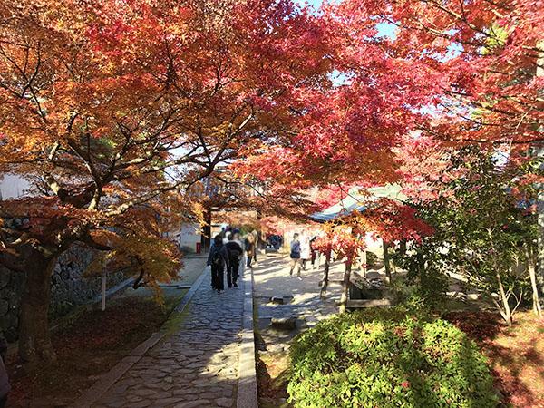 本堂に続く緩やかな坂から総門を振り返ると紅葉のアーチができていました。