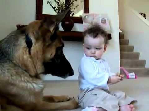 Малыш отнял еду у собаки, и домашний любимец удивил своей реакцией (Видео)