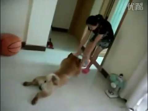 Собака собрала миллионы фанатов, показывая свое актерское мастерство (Видео)