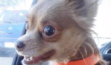 Бурные эмоции: собаки из приюта обретают семью