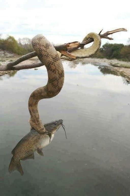 Шутки природы, от которых можно испугаться до смерти