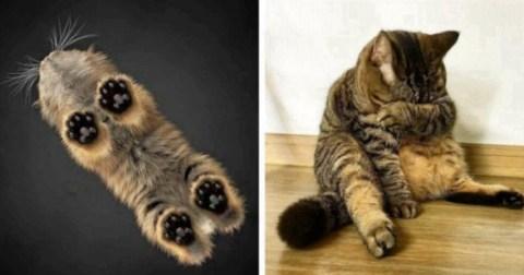Кот, который явно не ожидал такого разрыва шаблона