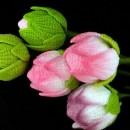 Как связать цветы лотоса крючком