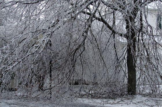 Ice Storm by David Lombardo