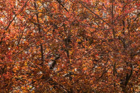 Red-Tree-4-(Optimized)
