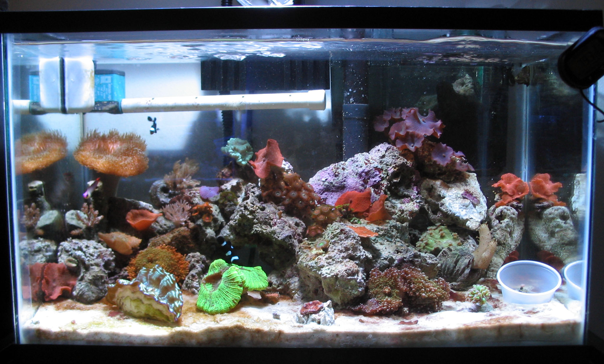 10 gallon saltwater fish tank images for Saltwater fish tank