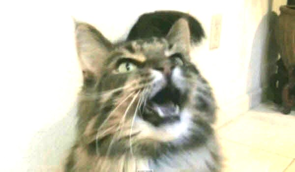 The Z4 Show Main Coon screencap