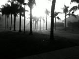 Morning fog rolls in off the ocean