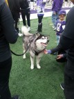 05 Huskies Mascot Dubs