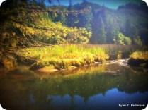 Karnowsky Creek upstream