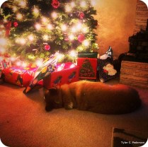 Miles asleep by the tree