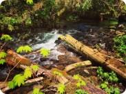 Scott Creek