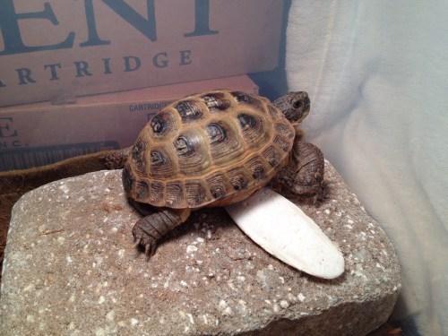 Sheldon's new basking rock.