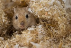 Help look after our small animals like this one in the Small Animals Club