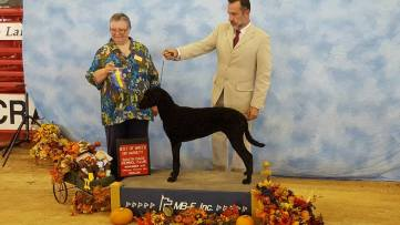 Sadie going BOB-First Show at 6 months