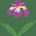 菖蒲の花のイラスト