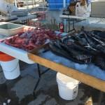 thornyhead-black-cod