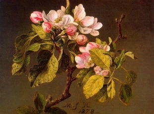 martin_johnson_heade_-_apple_blossoms-310x