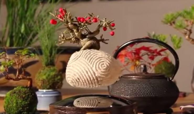Floating Bonsai Buy