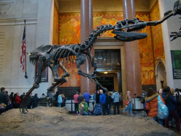 Adults-Only Sleepover at the American Museum of Natural ...