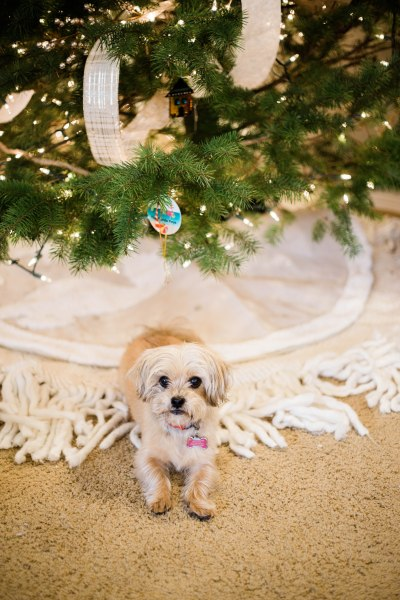 Christmas tree decoration ideas, Christmas tree decorations with ribbon, shorkie