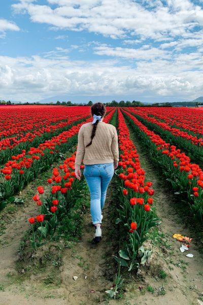 skagit valley tulip festival woman walking in red tulip field