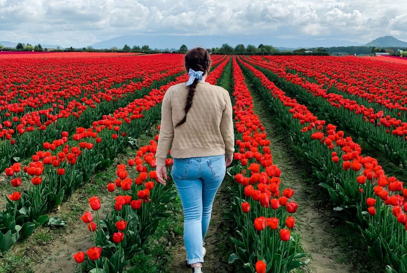 skagit valley tulip festival woman walking in red tulip field