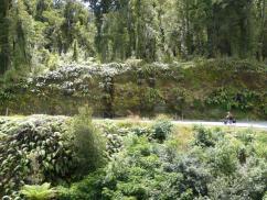 Philippa climbing Mount Hercules (2)
