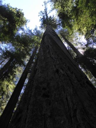 039. Tree at Founders Grove
