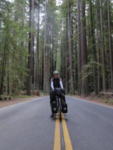 051b. On the Avenue of the Giants