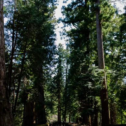 大きな杉の並木が続きます。200段の階段がきつかった・・・